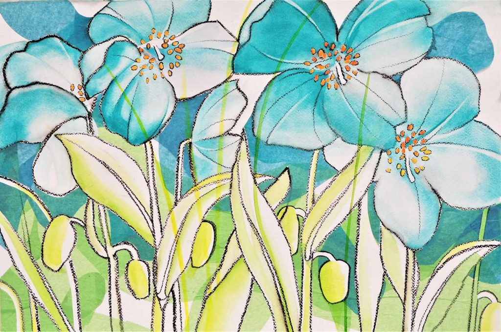 Himalayan poppies David Hawkins